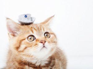 猫 便秘 解消